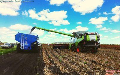 The Australian harvest. De Australische oogst.